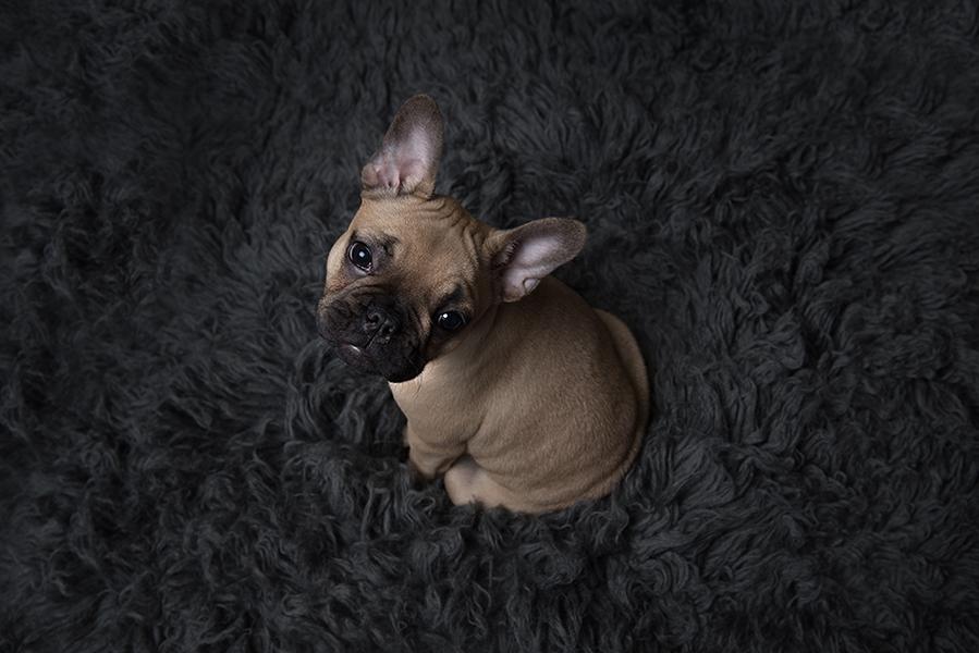 Dog Photography Sheffield England